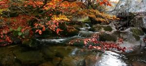 Pleno otoño.