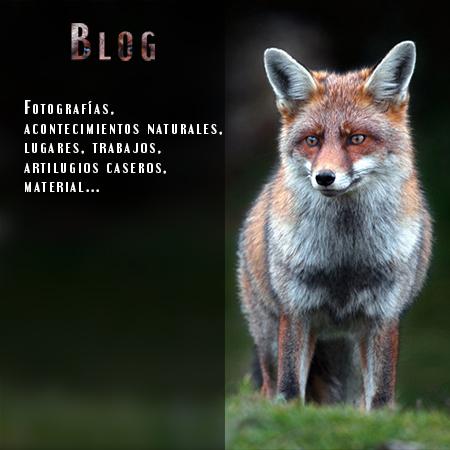 blog - Javi Roces - Fotografía y naturaleza