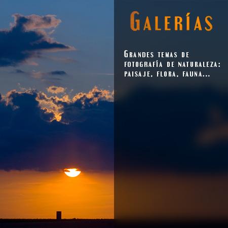galerias - Javi Roces Fotografía y Naturaleza