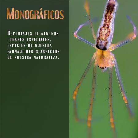 Monográficos - Javi Roces Fotografía y Naturaleza