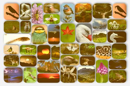 mosaico galerias - Javi Roces - Fotografía y Naturaleza
