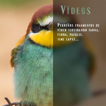 Vídeos - Javi Roces Fotografía y Naturaleza