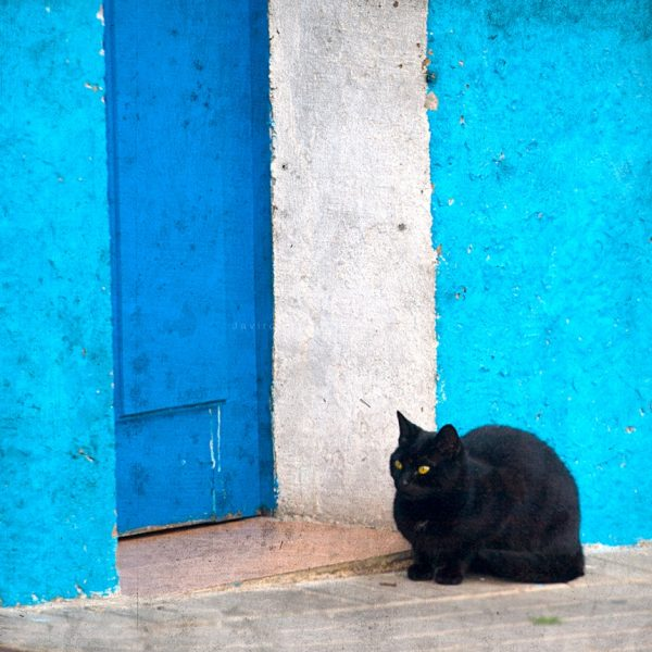 Gato negro y puerta azul