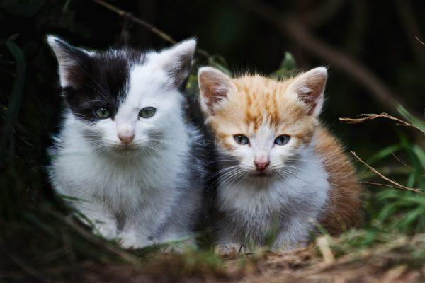 Hermanos gatos