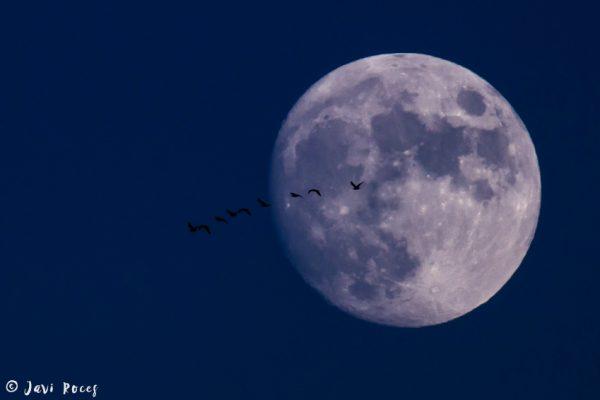 Luna y migración