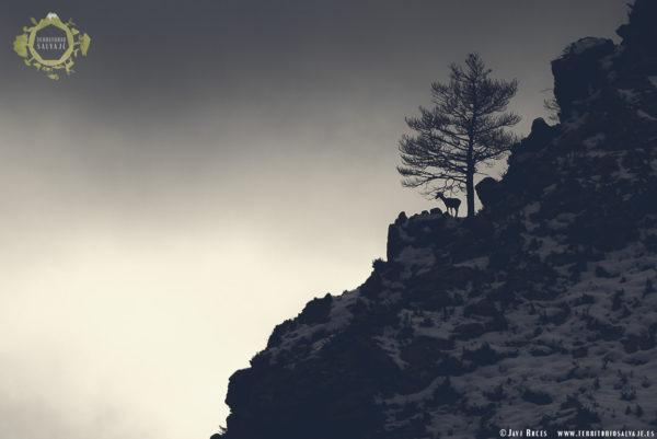 Venada en montaña