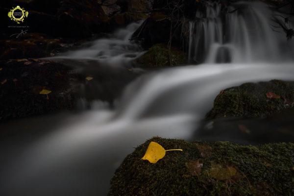Una hoja de otoño en la orilla