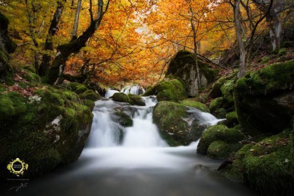 Cascada en arroyo atravesando hayedo otoñal