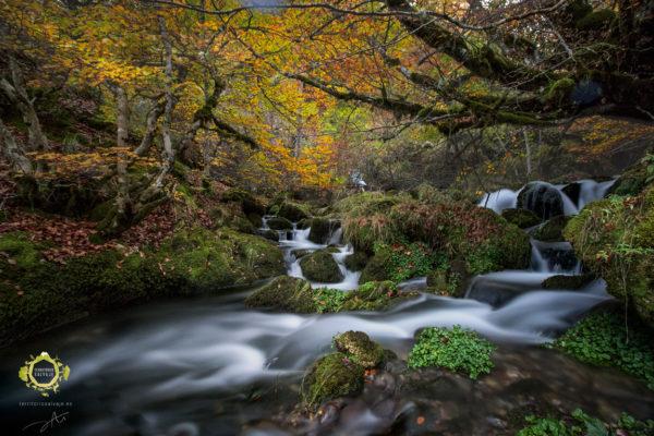 Saltos de agua atravesando el hayedo en otoño