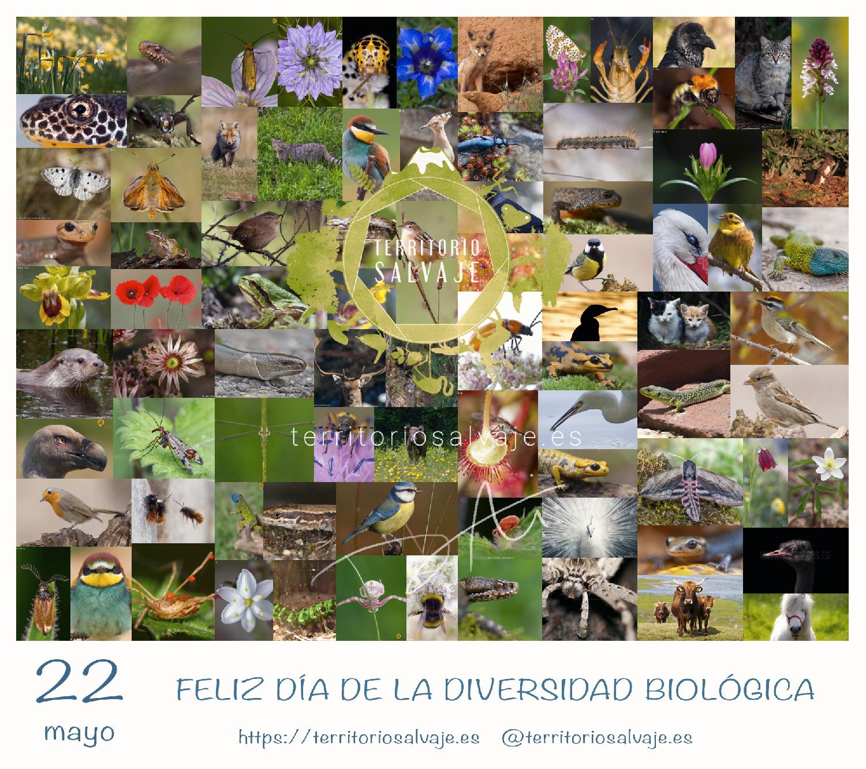 Día Biodiversidad Biológica Territorio Salvaje.es
